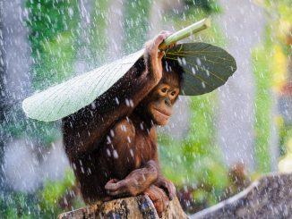 обезьянка под дождем