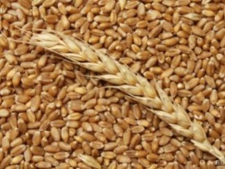 agriculture-foodstuffs-grain-29589.800