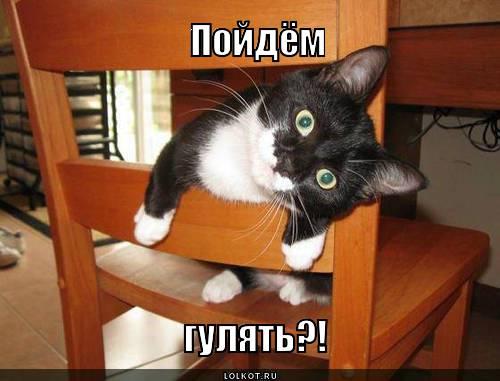 poydyom-gulyat_1368436627