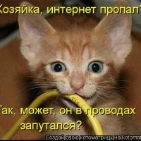 kotomatritsa_-Z